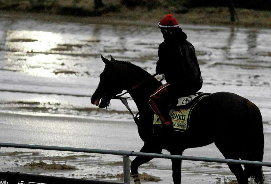 Preakness Stakes favorite California Chrome heads back to the barn after a morning workout in the rain under exercise rider Willie Delgado at Pimlico Race Course on Friday in Baltimore. Photo: Garry Jones — The Associated Press  / FR50389 AP