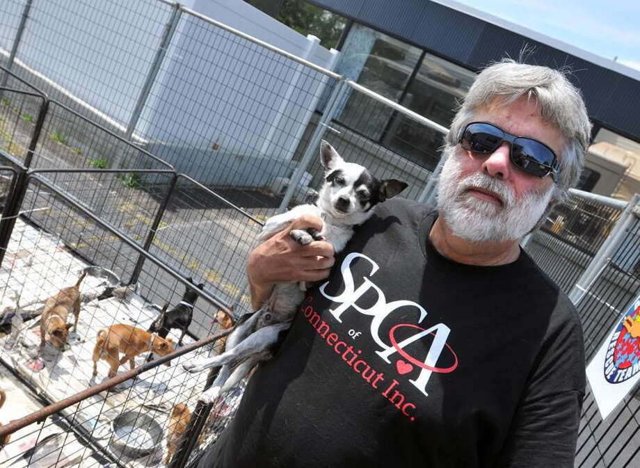 Frederick Acker of the SPCA of Connecticut holds a dog that was up for adoption at Who's Your Doggie in Milford in July 2012. Acker now faces prison time after he was convicted of 15 counts of cruelty to animals in Litchfield court. Photo: File Photo — New Haven Register