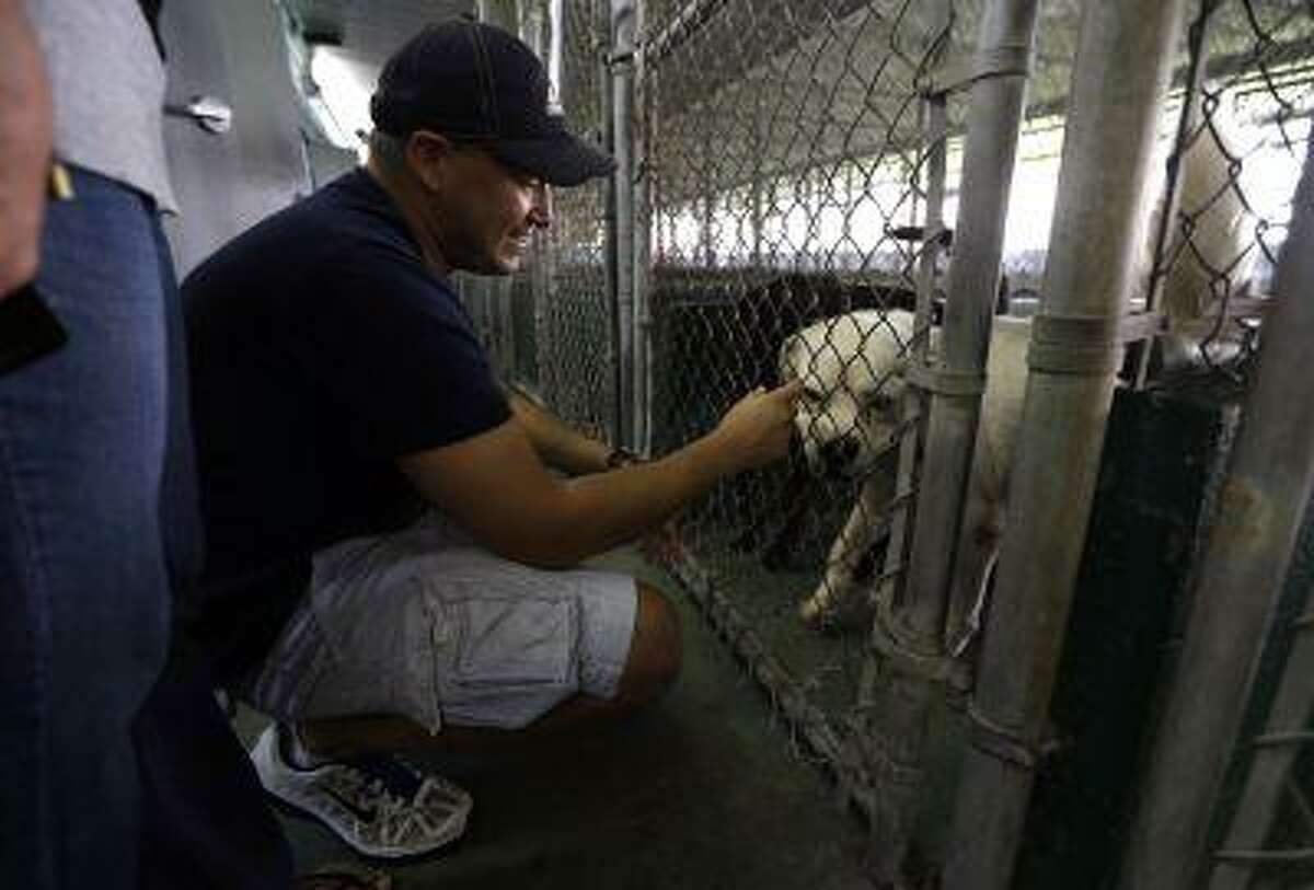 Dennis Jara of Miami looks at dogs for potential adoption at the Miami-Dade County Animal Services shelter, Tuesday, Oct. 9, 2012 in Medley, Fla.
