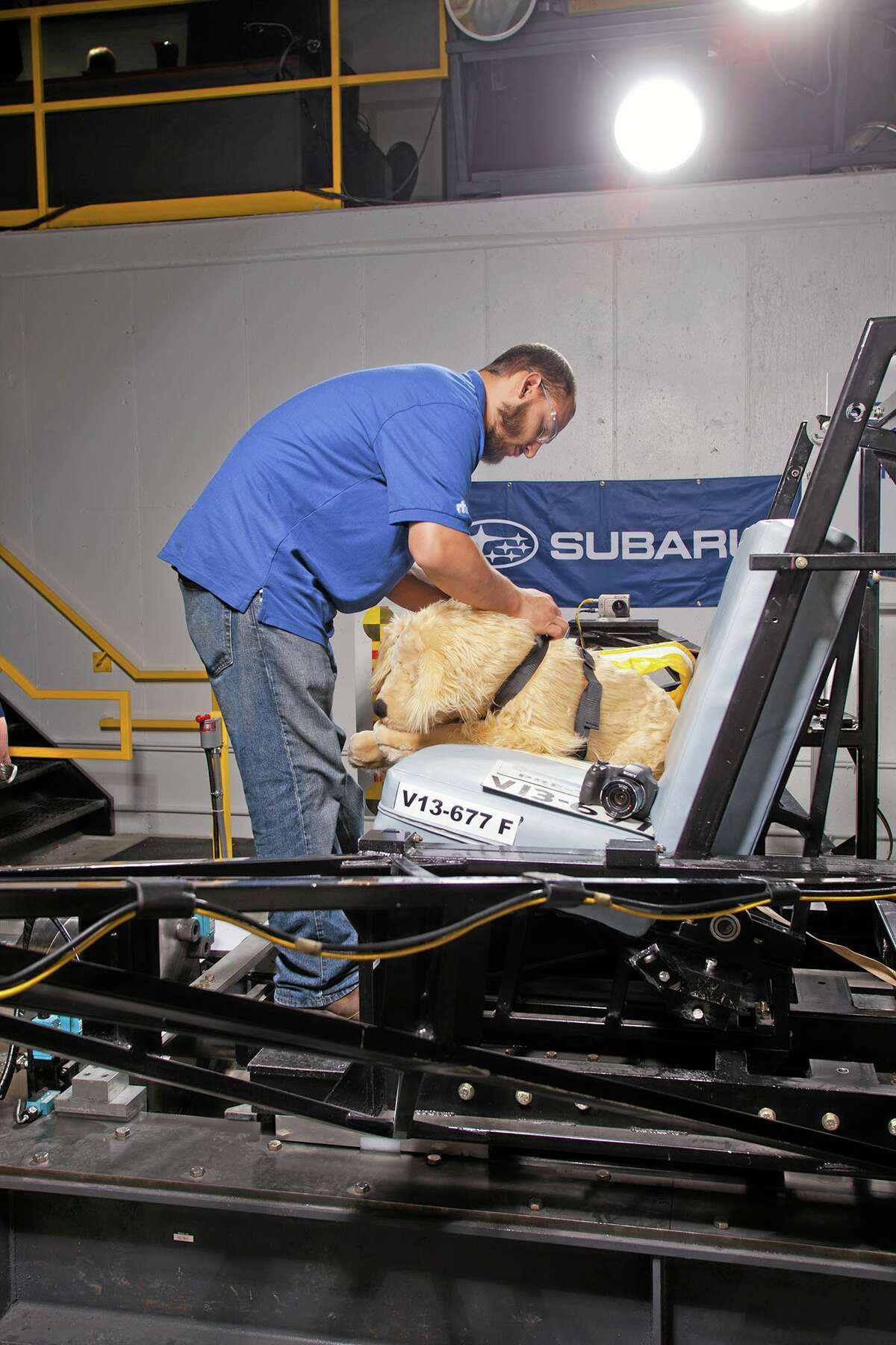 A MGA Research Corp. staff member preps a crash test dog for testing. The Center for Pet Safety in Manassas, Va., conducted a collaborative crash study to test the effectiveness of popular pet harnesses. All the dummy dogs used to test dog restraint harnesses for the Center for Pet Safety make up a team of what is believed to be the nation's first instrumented, weighted and correct canine prototypes.