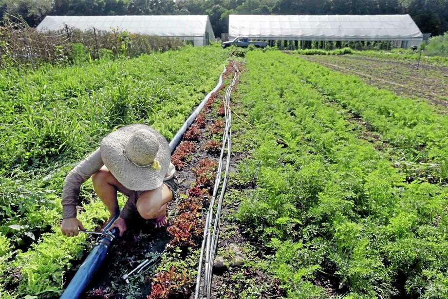 Farmer Katie Miller, 32, of Providence, Rhode Island, repairs a leaking irrigation pipe at Scratch Farm in Cranston, Rhode Island. Photo: Steven Senne — The Associated Press  / AP