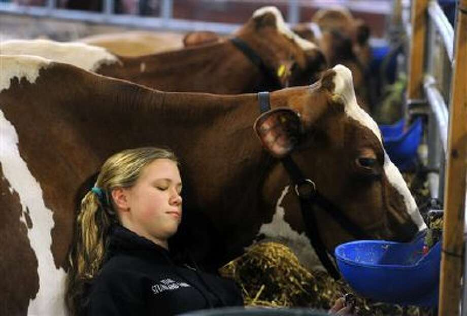 Kristin Johns, 14, of Berks County, Pa., rests her head on her cow Jan. 10 at the Pennsylvania Farm Show in Harrisburg, Pa.. Photo: AP / York Daily Record