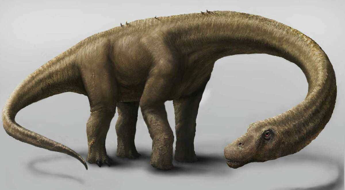 This undated artist rendering provided by the Carnegie Museum of Natural History shows the Dreadnoughtus. The dinosaur Dreadnoughtus had a 37-foot-long neck, 30-foot tail, and weighed an estimated 65 tons. In life, Dreadnoughtus was an herbivore that likely spent much of its life eating massive quantities of plants to maintain its enormous body size.