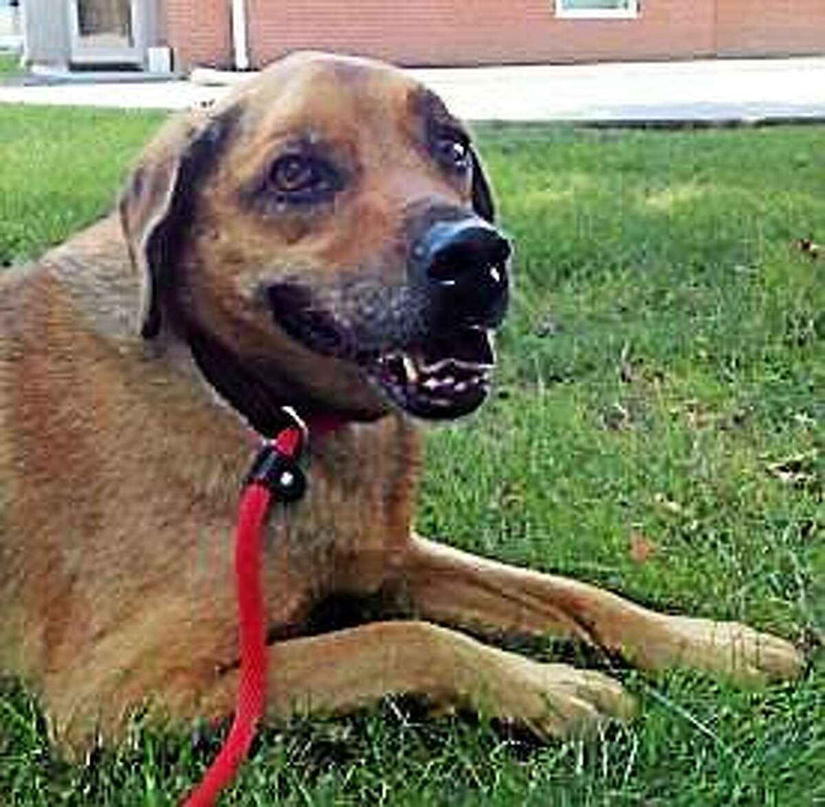 Cochise Cochise is an older Hound mix, 10-years-old and in need of a new family and a place to call home. He would love a bit of exercise, a little entertainment, and a comfy place to rest his head. Cochise is currently staying in a foster home. Please call Adoptions (860-594-4500, ext. 6100) to make an appointment to meet this handsome guy. Inquiries for adoption should be made at the Connecticut Humane Society located at 701 Russell Road in Newington or by calling (860) 594-4500 or toll free at 1-800-452-0114.