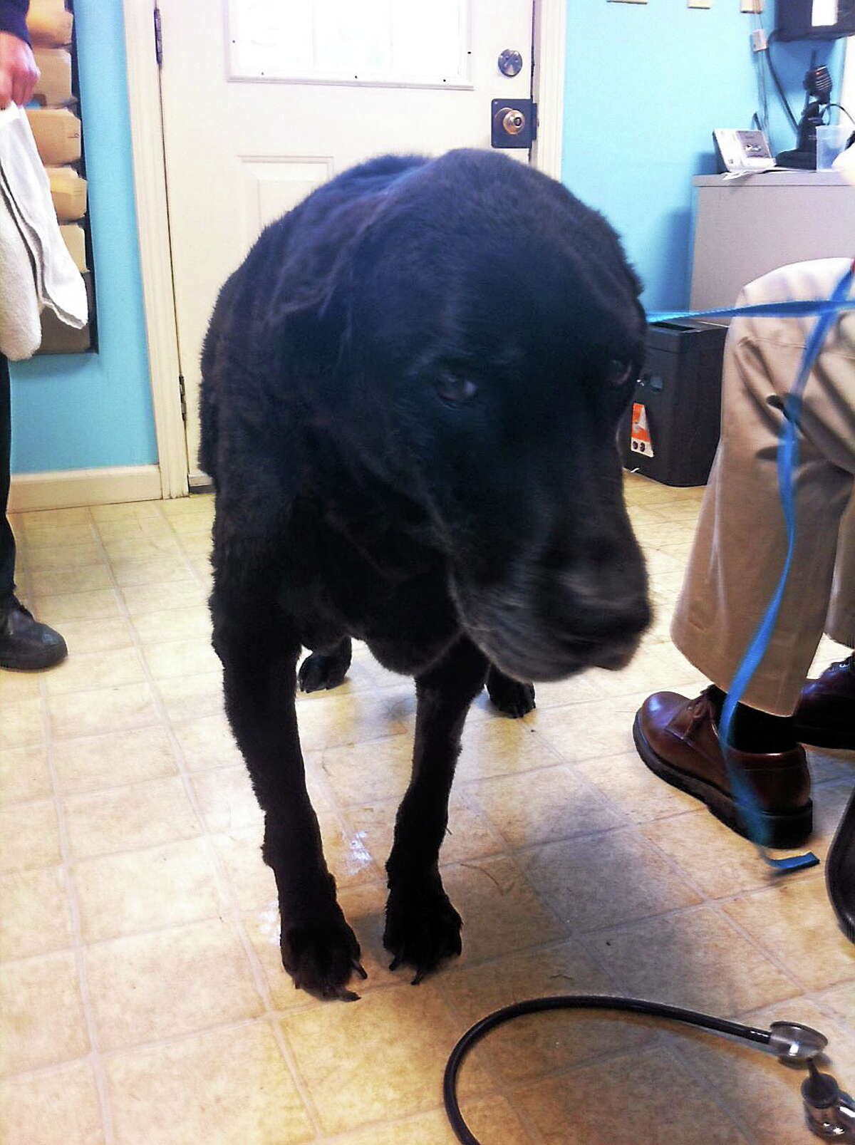 """A dog seized from a Torrington house where 26 animals were found in """"deplorable conditions,"""" according to police."""