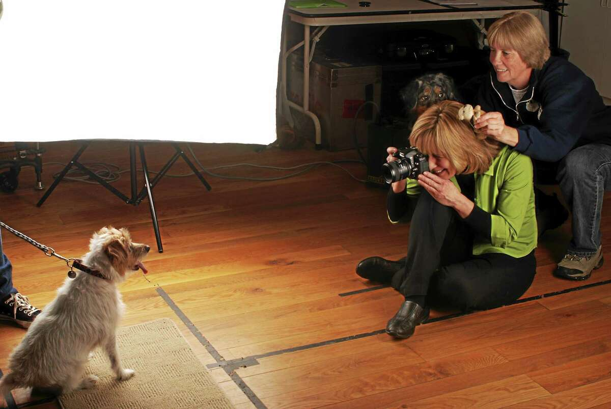 New Milford photographer Sally Andersen-Bruce previously photographed one of the United States Postal Service's biggest animal rescue stamps. This photo features the shelter dog Nuzzle while Animal Control Officer Audrey McKay and Bindi-Su (another dog in background) looking on. Andersen-Bruce gets a unique look on dogsí faces by placing food on top of her own head before photographing them.