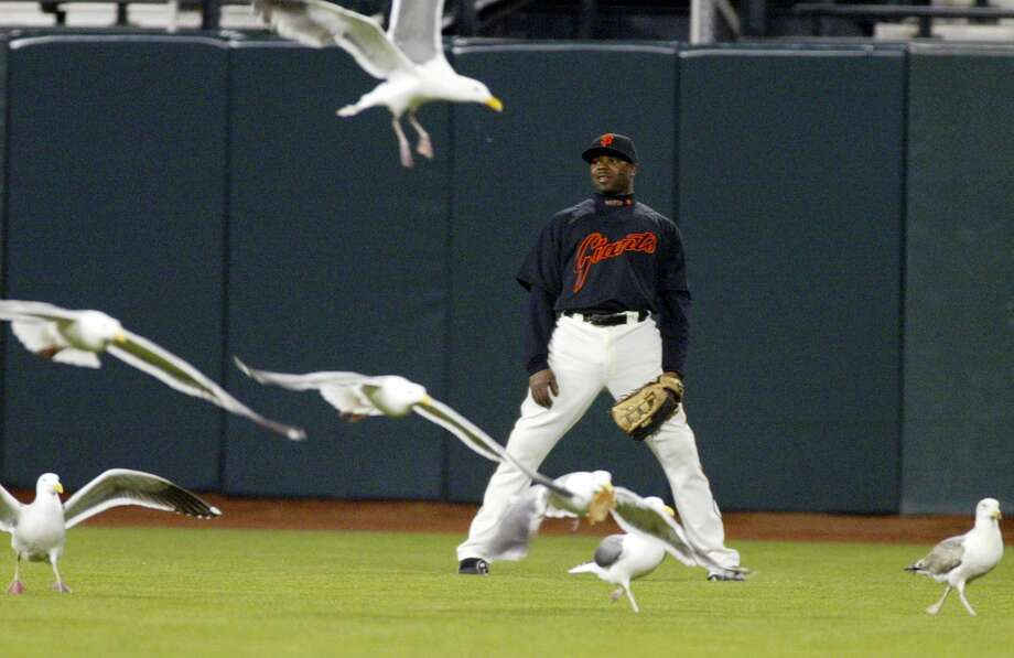In this March 27, 2008 file photo, Giants outfielder Rajai Davis is surrounded by seagulls in center field during an exhibition game against the Seattle Mariners in San Francisco. Photo: George Nikitin — The Associated Press File Photo  / AP