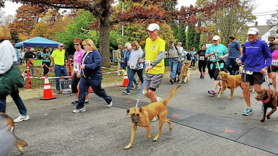 FILE: Runners participate in 2014's well-attended Run & Wag 5K run in Cornwall raised money for The Little Guild of St. Francis animal shelter in Cornwall. Photo: N.F. Ambery — Special To The Register Citizen
