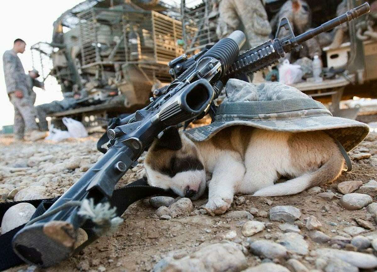 A puppy sleeps under a U.S soldier's hat and rifles in Baquba, in Diyala province some 65 km (40 miles) northeast of Baghdad November 6, 2008. REUTERS/Goran Tomasevic