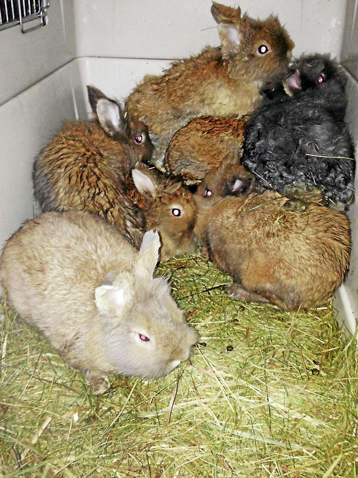 Some of the animals seized by Torrington animal control from a Hayden Hill Road home.