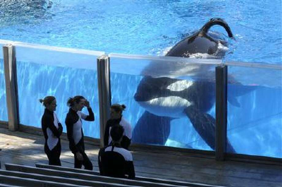 Killer whale Tilikum, right, watches as SeaWorld Orlando trainers take a break during a training session at the theme park's Shamu Stadium in Orlando, Fla., in this file photo. Photo: AP / FR121174 AP