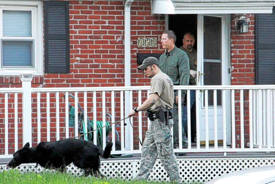 A Torrington Police K-9 officer leads a police dog into a home on McKinley Street on Thursday, June 19, 2014, in Torrington. Witnesses reported hearing a loud bang at the house before a tactical team entered the house. Photo: Esteban L. Hernandez — The Register Citizen