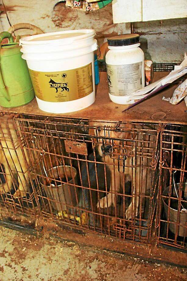 Animal control officers found unsatisfactory conditions at this kennel in Michigan during a 2013 check. Photo: Oakland County Animal Control