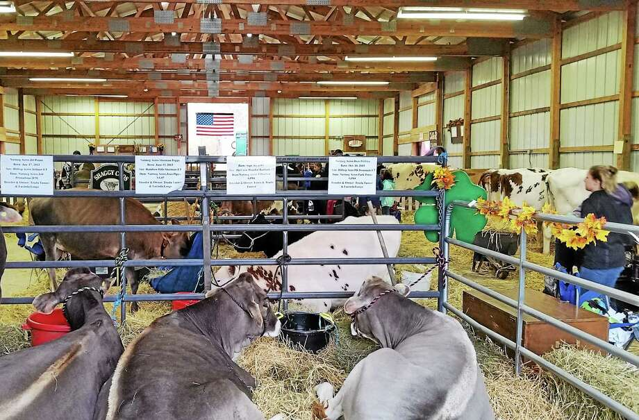 Animal line of the barns at the Harwinton Fairgrounds Saturday during the 158th annual Harwinton Fair. Despie a rainy first day, the fair continues Sunday to better weather. Photo: N.F. Ambery — Special To The Register Citizen