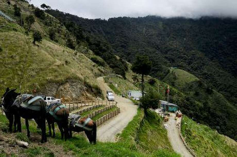 Mules used to transport cargo over steep hillsides stand at the site of AngloGold Ashanti's La Colosa gold deposit in Cajamarca, Tolima, Colombia. (Bloomberg News/Alejandra Parra). Photo: Bloomberg / BLOOMBERG