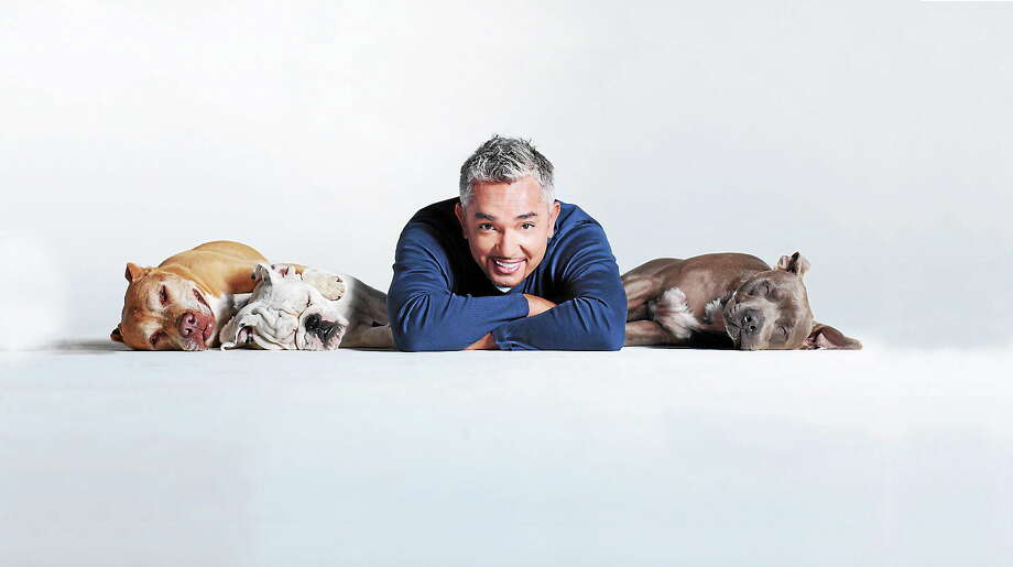 "Submitted photo - Cesar Millan Cesar Millan, whose reputation as a ""Dog Whisperer"" gained him international fame, is coming to Waterbury in March. Photo: Journal Register Co."