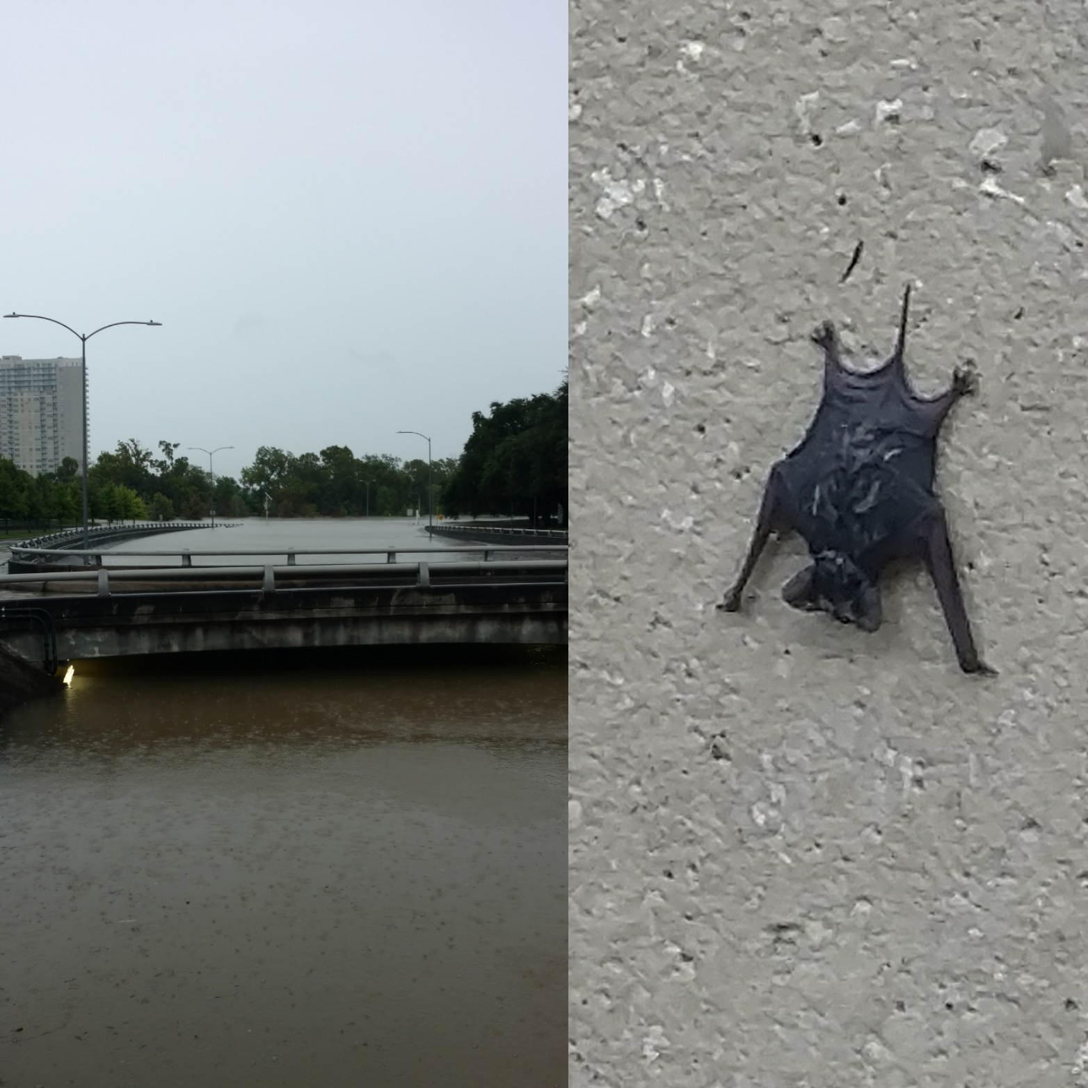 Bats From The Local Bat Colony Litter Walls Of America Tower After Waugh Bridge Gets Flooded Houston Chronicle