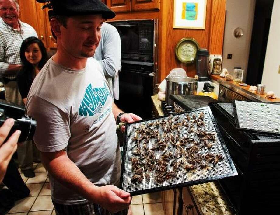 """Chef Matt Hurlburt removes the cicadas from the dehydrator, ready to eat.  Peter Casolino / Register <a href=""""mailto:pcasolino@newhavenregister.com"""">pcasolino@newhavenregister.com</a>"""