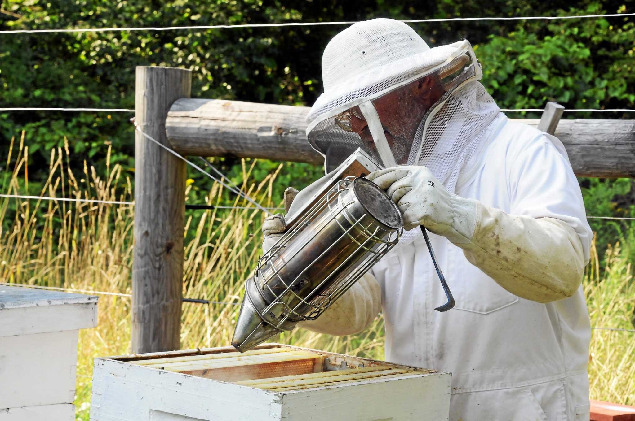 connecticut no land of honey for bees the register citizen