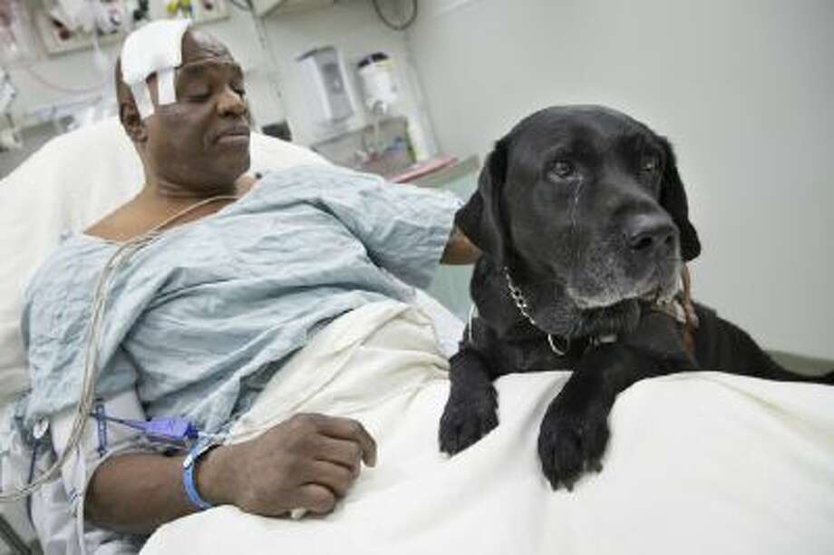 Cecil Williams pets his guide dog, Orlando, in his hospital bed following a fall onto subway tracks Tuesday in New York.