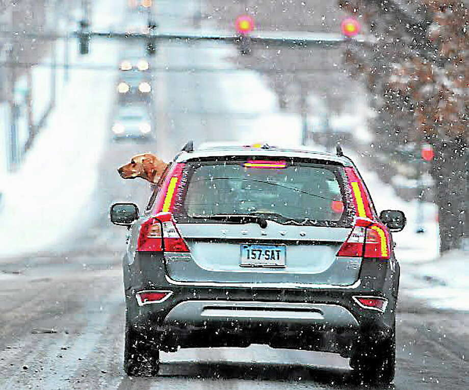 A pooch looks out of his car as the owner drives along Fountain Street in New Haven as the snowstorm starts on Saturday morning.  pcasolino@NewHavenRegister Photo: Peter Casolino / New Haven Register