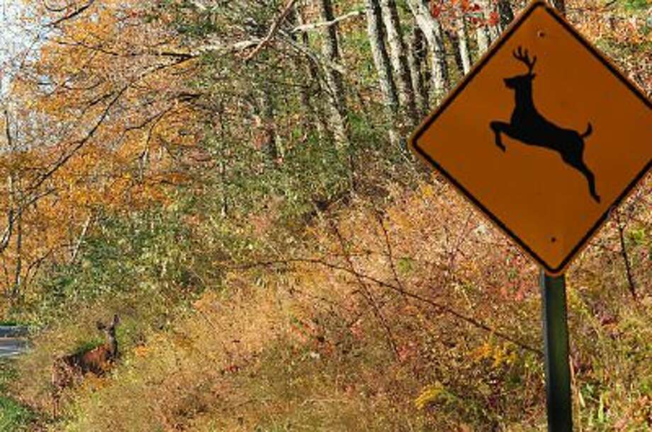 "A deer crosses at a ""deer crossing"" in the Shenandoah National Park November 1, 2008."