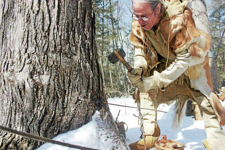 Jim Dina, research assistant of the Institute For American Indian Studies in Washington, demonstrated how to tap a maple tree with a stone axe during the organization's annual Maple Sugaring Festival. Photo: Shako Liu—Register Citizen