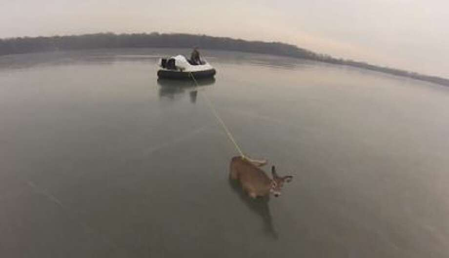 Two volunteers in a hovercraft rescue a stranded deer from a frozen Minnesota lake.