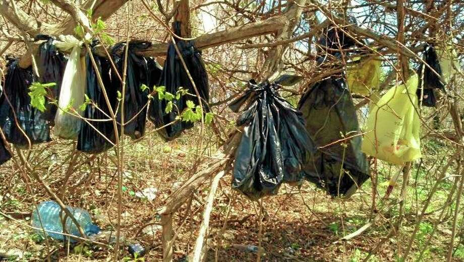 In this April 24 photo, plastic bags containing the remains of about 25 cats are hanging from a tree in a wooded area in Yonkers, N.Y. Photo: SPCA Of Westchester's Humane Law Enforcement Division  / SPCA of Westchester's Humane Law Enforcement Division
