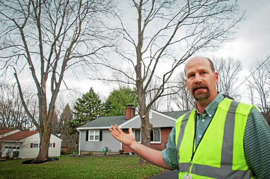 Richard Sullivan, an arborist with Connecticut Light & Power, points out maple trees in a Cheshire neighborhood that were trimmed by the utility. Photo: Melanie Stengel — New Haven Register      / Melanie Stengel