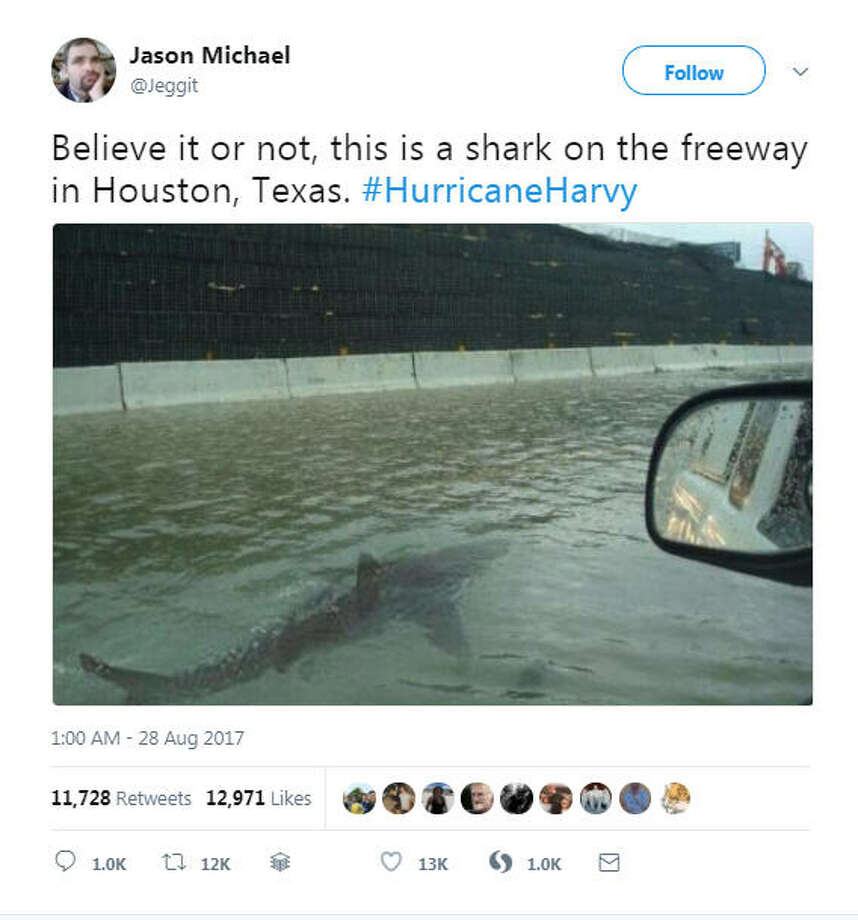 Photos: Tropical Storm Harvey floods HoustonAn Ireland-based blogger shared this viral, but long-debunked image claiming to show a shark on a Houston highway.See real images of the devastation caused by Tropical Storm Harvey.  Photo: Jason Michael On Twitter