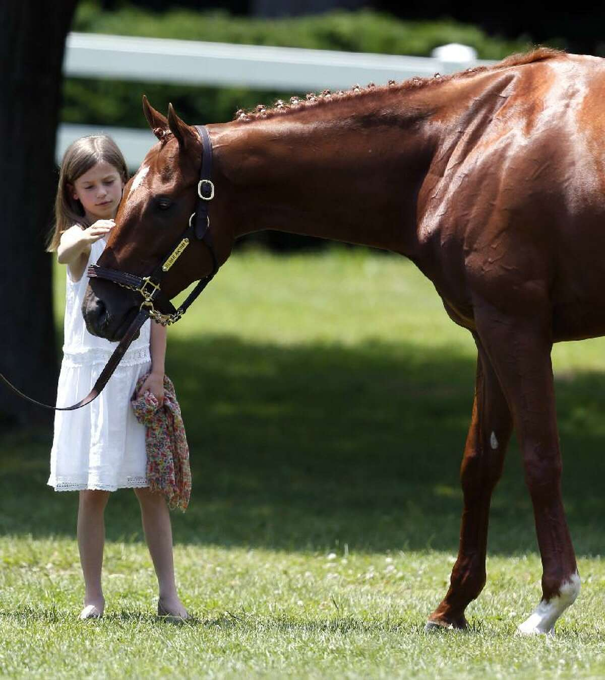 ASSOCIATED PRESS Eliza McCalmont pets Kentucky Derby and Preakness winner I'll Have Another during a news conference at Belmont Park in Elmont, N.Y., on Friday. I'll Have Another's bid for a Triple Crown ended with the shocking news that the colt was out of the Belmont Stakes due to a swollen left front tendon. The Belmont Stakes horse race is today.