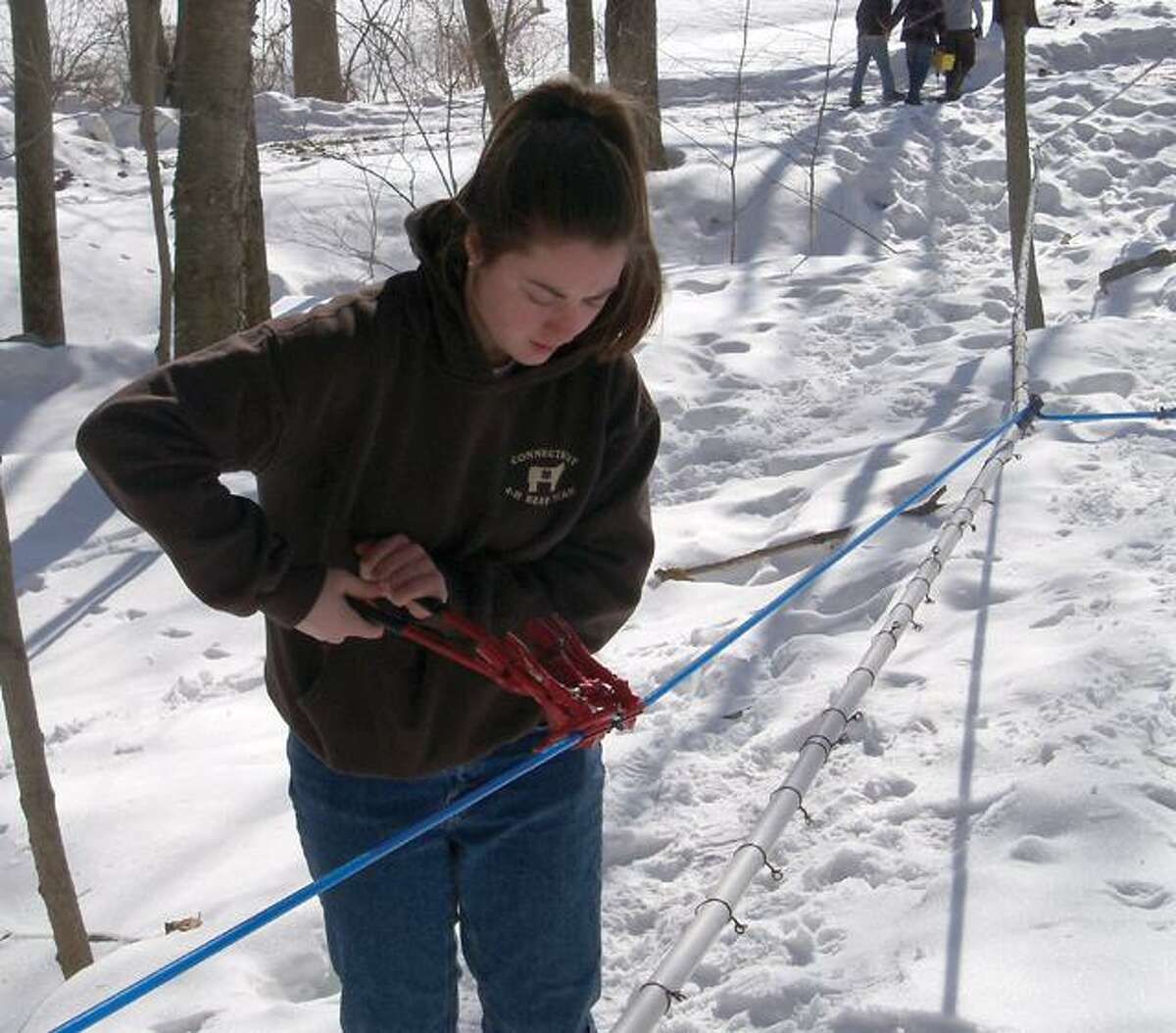 RICKY CAMPBELL/ Register CitizenSuzie Theriault, a junior at Wamogo Regional High School, works on the line after the trees are tapped for syrup right off Route 202. The school sells the syrup once it's all collected.