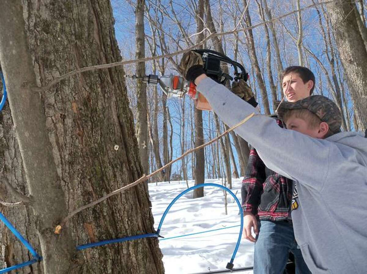 RICKY CAMPBELL/ Register CitizenWamogo Regional High School students tap a tree outside the school, just off Route 202, for syrup. The syrup is collected at the bottom of the hill and later sold by the school.
