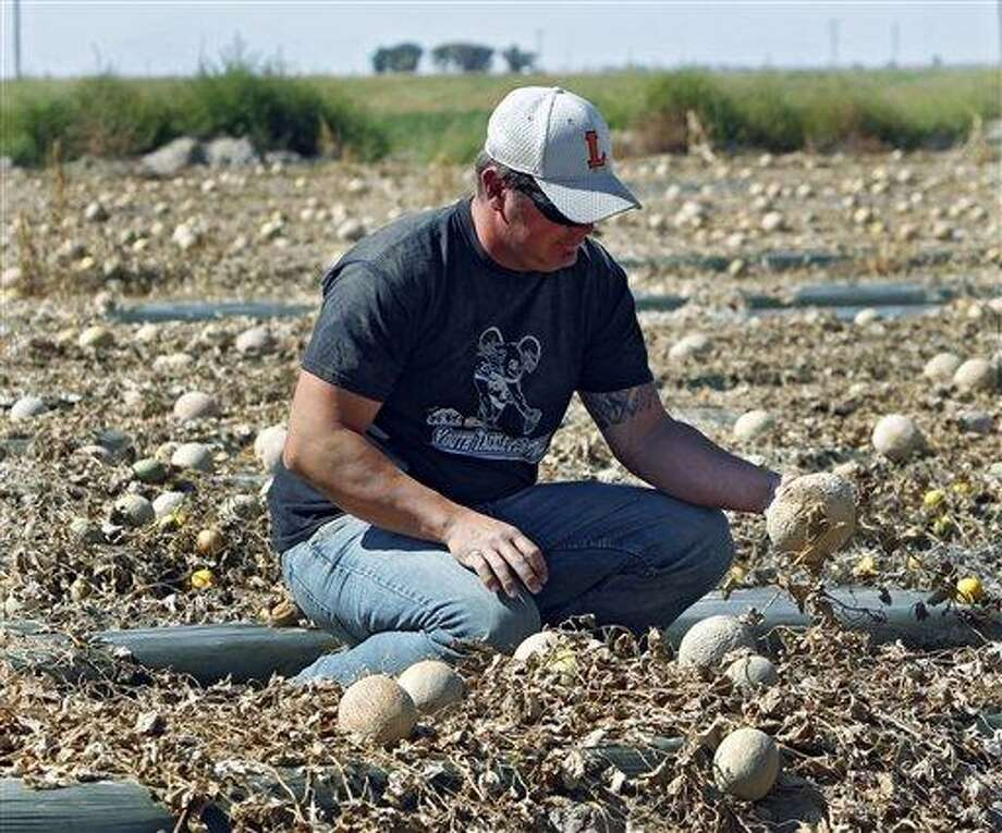 Owner Eric Jensen examines cantaloupe on the Jensen Farms near Holly, Colo., on Wednesday, Sept. 28, 2011. The Food and Drug Administration has recalled 300,000 cases of cantaloupe grown on the Jensen Farms after connecting it with a listeria outbreak.  Officials said Wednesday more illnesses and possibly more deaths may be linked to the outbreak of listeria in coming weeks.  (AP Photo/Ed Andrieski) Photo: AP / AP