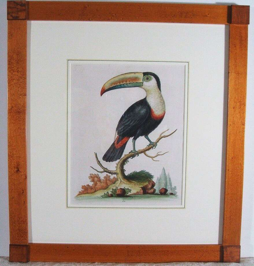 Submitted photos A whimsical Toucan by George Edwards, London circa 1743-51, from A Natural History of Uncommon Birds.