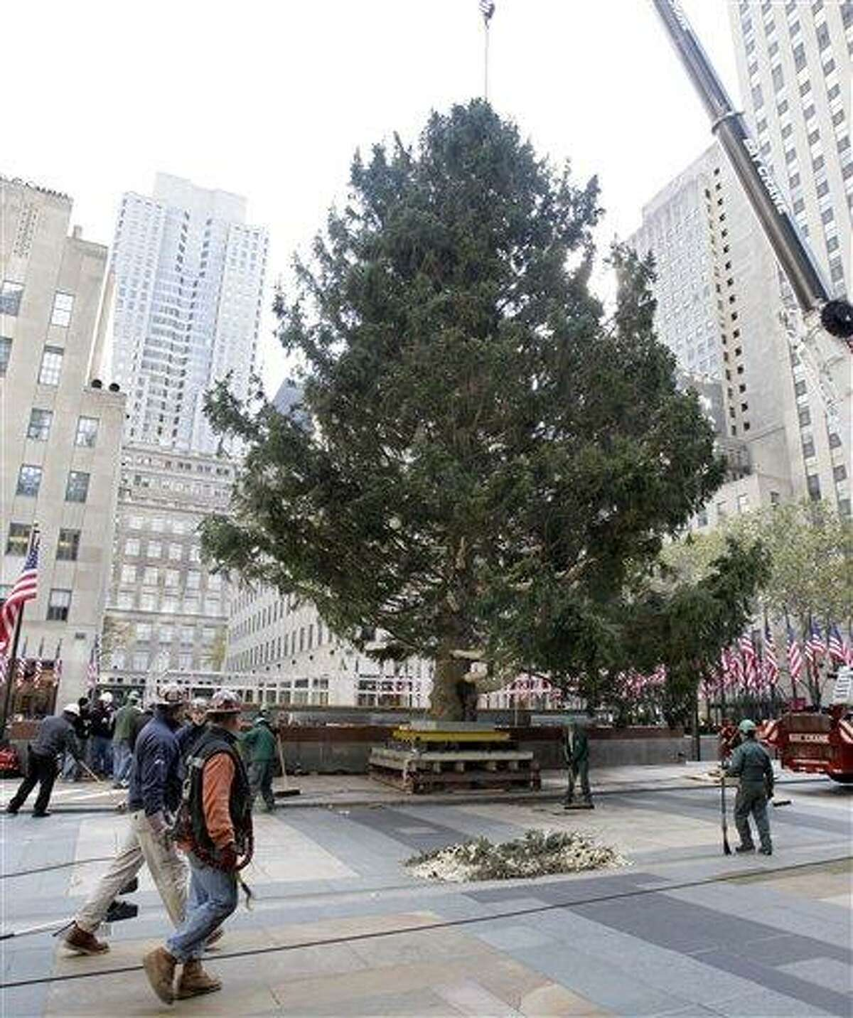 Workers position the annual Rockefeller Center Christmas tree, in New York, Friday, Nov. 11, 2011. The 74-foot Norway Spruce, from Mifflinville, Pa. is approximately 75 years old and is scheduled to be illuminated Nov. 30. (AP Photo/Richard Drew)