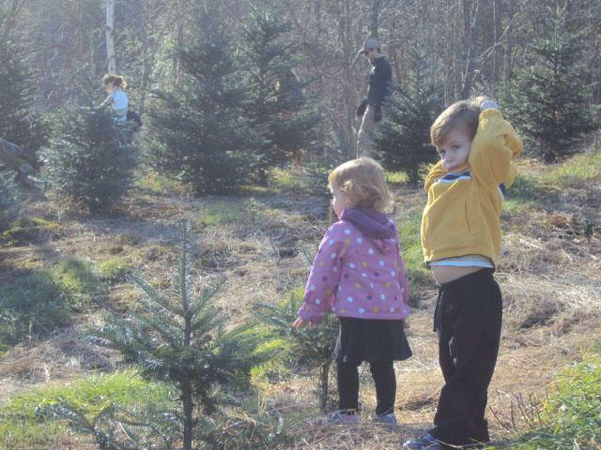 RICKY CAMPBELL/ Register Citizen Avon residents Tyler, 3, and his sister McKenzie, 2, help their parents find a Christmas tree Friday at the Holiday Farm in New Hartford. The Hayward Road farm also has a Gift Barn and museum for families to enjoy any weekend from 9:30 a.m. to 4 p.m.