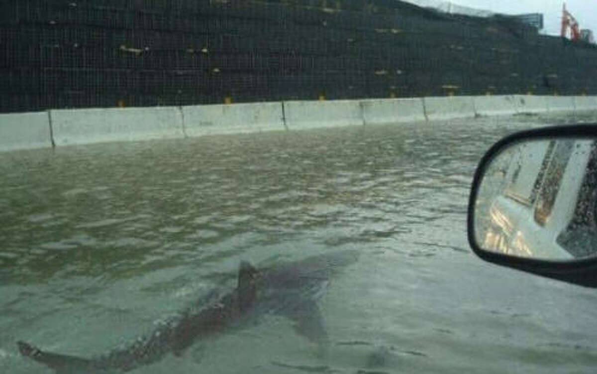 Hoax:Sharks on the freeway In what has seemingly become a tradition whenever Houston floods, a long-debunked image of a shark swimming along side a car is being shared on social media. This time a Dublin, Ireland based blogger named Jason Michael helped start the rumor. But 9 pm Monday, his tweet had been shared nearly 47,000 times. This image has surfaced following number of disasters, including Houston's 2015 Memorial Day flood.