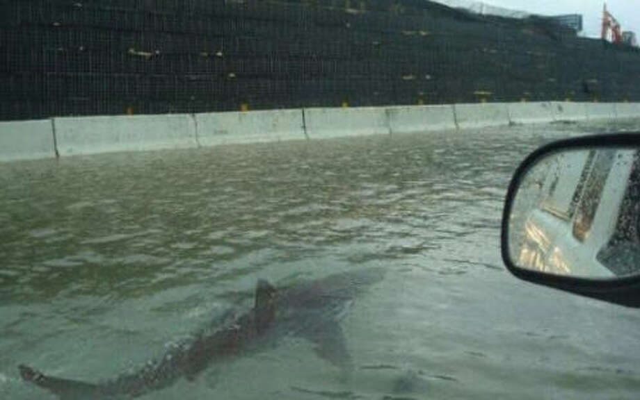 Hoax:Sharks on the freewayIn what has seemingly become a tradition whenever Houston floods, a long-debunked image of a shark swimming along side a car is being shared on social media.  This time a Dublin, Ireland based blogger named Jason Michael helped start the rumor. But 9 pm Monday, his tweet had been shared nearly 47,000 times.This image has surfaced following number of disasters, including Houston's 2015 Memorial Day flood. Photo: Jason Michael On Twitter
