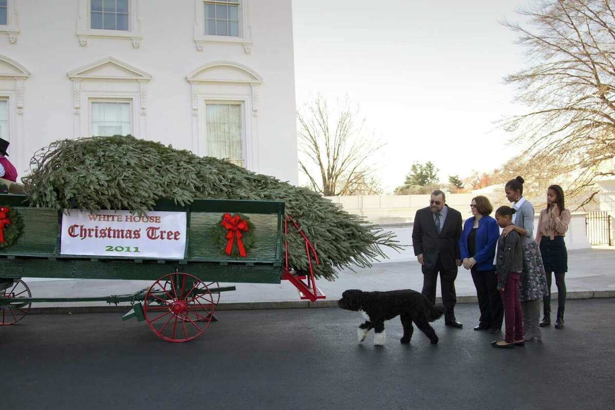 First Lady Michelle Obama and daughters Malia and Sasha watch as the White House Christmas tree arrives at the North Portico Friday in Washington. The 19-foot-tall balsam fir, being inspected by the family dog Bo, is from Tom and Sue Schroeder's farm near Neshkoro, Wisc. From left to right are: Tom Schroeder, Sue Schroeder, Sasha Obama, Michelle Obama, and Malia Obama. (AP Photo/J. Scott Applewhite)