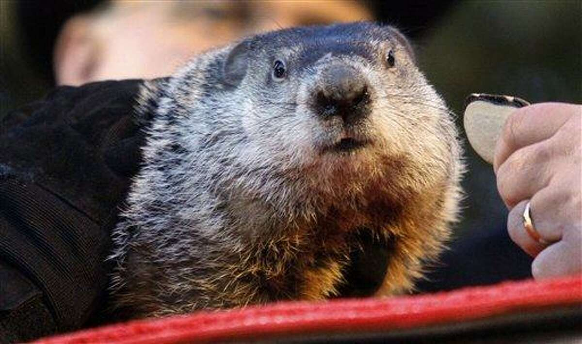 Punxsutawney Phil, the weather predicting groundhog, is seen on his stump during the annual Groundhog Day festivities in Punxsutawney, Pa. Associated Press file photo