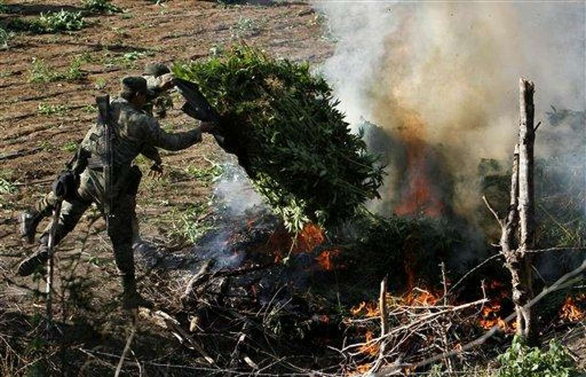 Soldiers incinerate marijuana plants at an illegal plantation found during a military operation on Friday at the Culiacan mountains, northern Mexico, Monday. Associated Press
