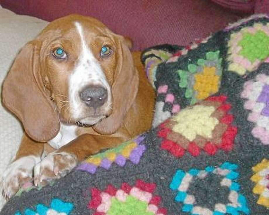 Shelter dogs benefit from the warmth of a blanket donated by a friend.