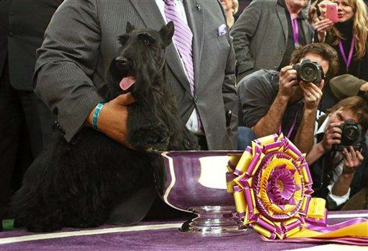 Sadie, a Scottish terrier, is held next to the trophy after winning best in show at the Westminster Kennel Club Dog Show at Madison Square Garden in New York, Tuesday, Feb. 16, 2010. (AP Photo/David Goldman)
