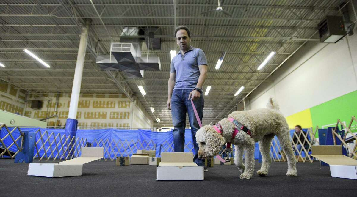 Marcus Waldman of North Stamford lets Riesling, a 3 1/2 year old Australian Labradoodle use her nose to find a treat during a Nosework clinic at the Bandilane Canine Center in Stamford, Connecticut on Friday, August 25, 2017. This group focuses on learning how to encourage and develop dogs' natural scenting abilities by using their hunting instinct.
