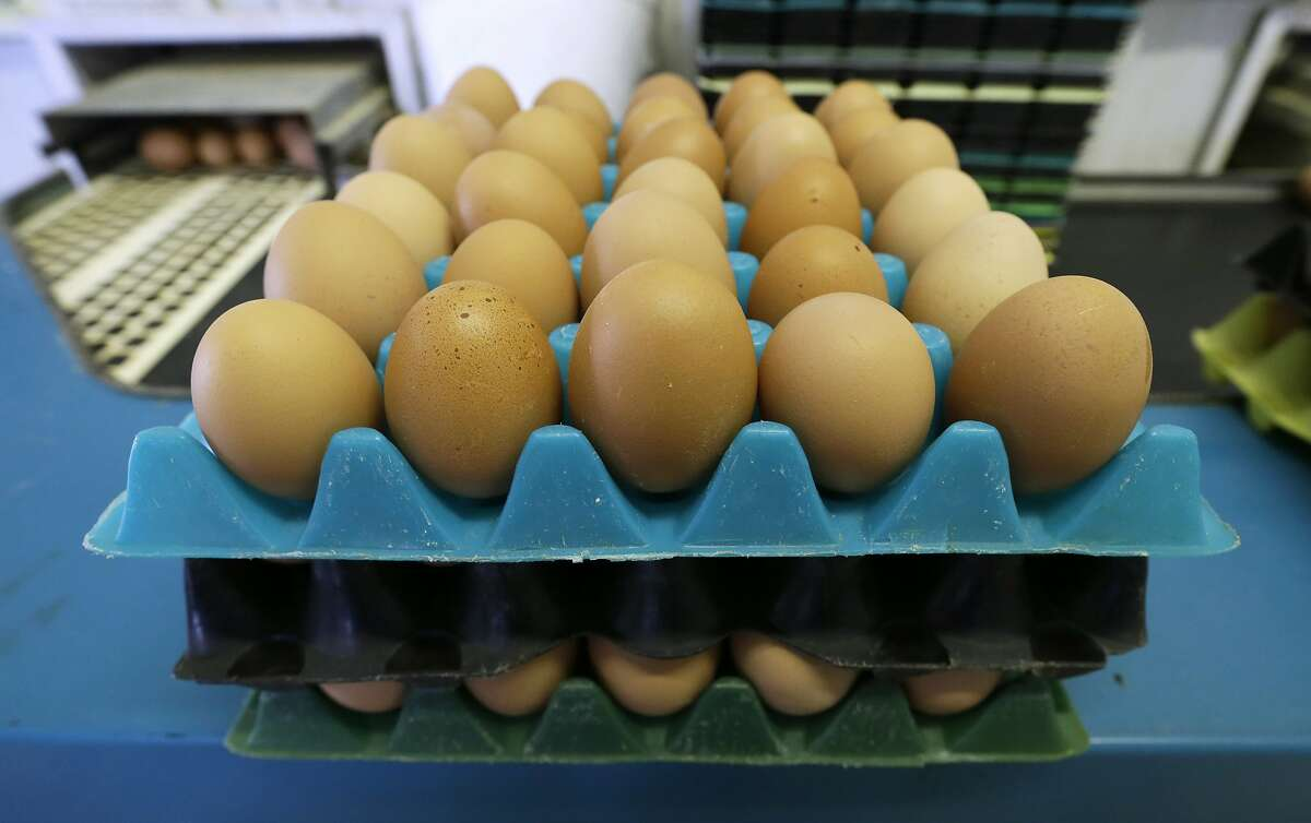 FILE - In this Oct. 21, 2015, file photo, eggs laid by cage-free chickens sit in a holder after being sorted at a farm near Waukon, Iowa. Warehouses, distribution and grocery stores are overflowing with some food staples, such as milk, eggs and frozen fruits and vegetables. It�s the result of increased production and decreased imports. (AP Photo/Charlie Neibergall, File)