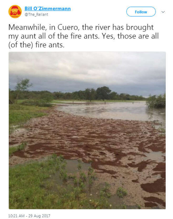 A photo of fire ants filling a Texas river thanks to Harvey floodinga is what nightmares are made of. Swipe through to see photos of how other animals have fared in Harvey. Photo: Bill O'Zimmerman/Twitter