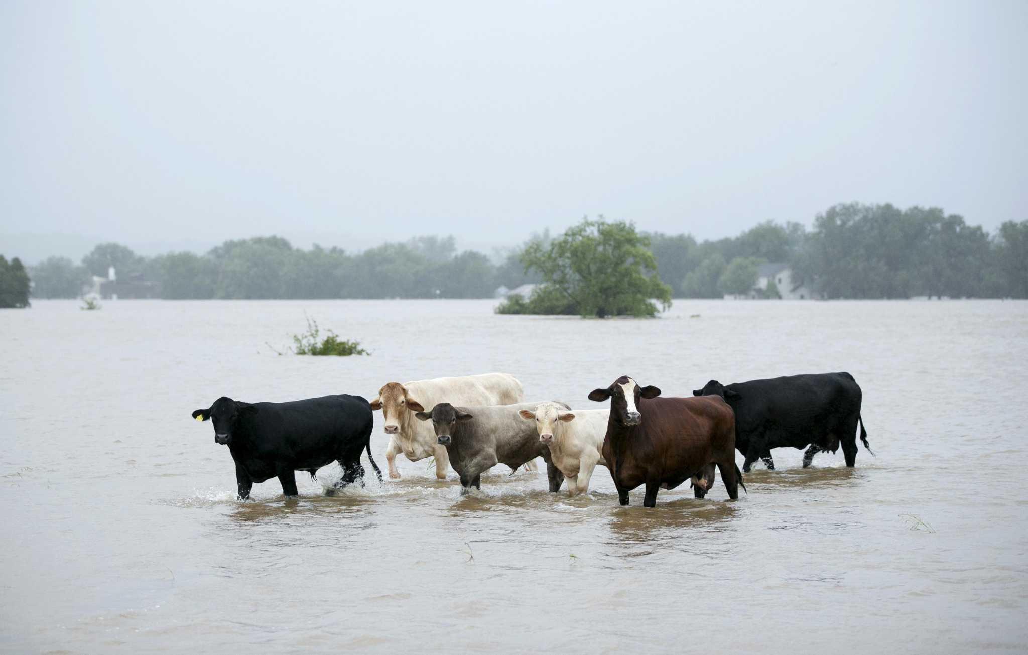 Harvey S Toll On Texas 100 Billion Ag Industry Still