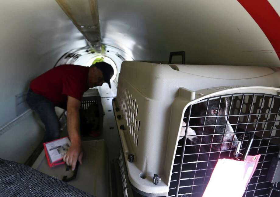 A dog looks out its kennel Tuesday morning, Aug. 29, 2017 after being loaded onto a Flight to Freedom plane headed for New Jersey. About 100 dogs from Animal Care Services were being transported by the not-for-profit organization to the New Jersey shelter to make room for the expected influx of animals displaced by Hurricane Harvey and it's remnants. Photo: William Luther, Staff / San Antonio Express-News / © 2017 San Antonio Express-News